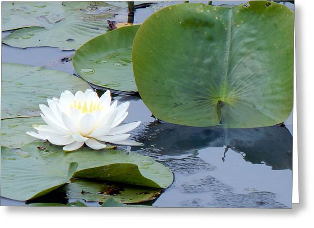 Wildlife Refuge. Greeting Cards - Lily and Leaf Greeting Card by Wild Thing