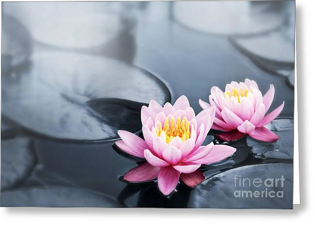 Water Lily Pond Greeting Cards - Lotus blossoms Greeting Card by Elena Elisseeva