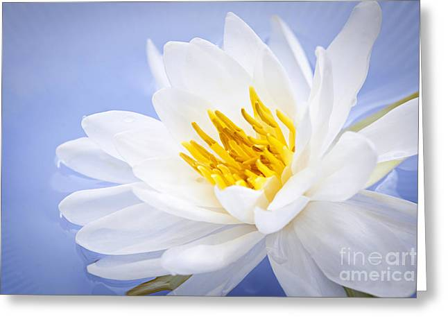 White Waterlily Greeting Cards - Lotus flower Greeting Card by Elena Elisseeva