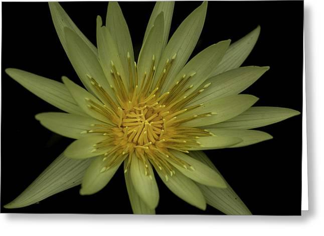 Aquatic Greeting Cards - Lotus Flower Greeting Card by Greg Thiemeyer