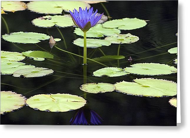 Kristin Smith Greeting Cards - Lotus Flower Reflection Greeting Card by Kristin Smith
