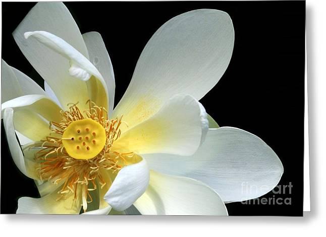 Lotus From Above Greeting Card by Sabrina L Ryan