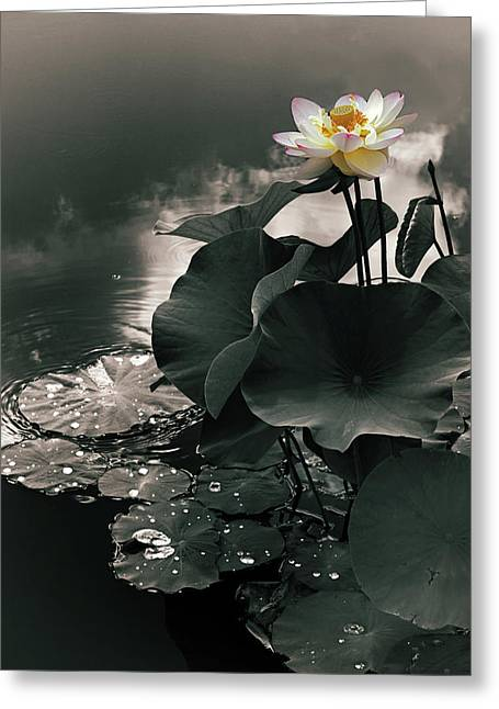 Lotus In The Mist Greeting Card by Jessica Jenney