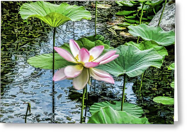 Lotus In The Pond 4 Greeting Card by Lanjee Chee