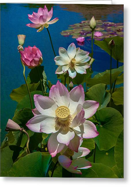 Lotus Lily Greeting Cards - Lotus Pool Greeting Card by Chris Lord