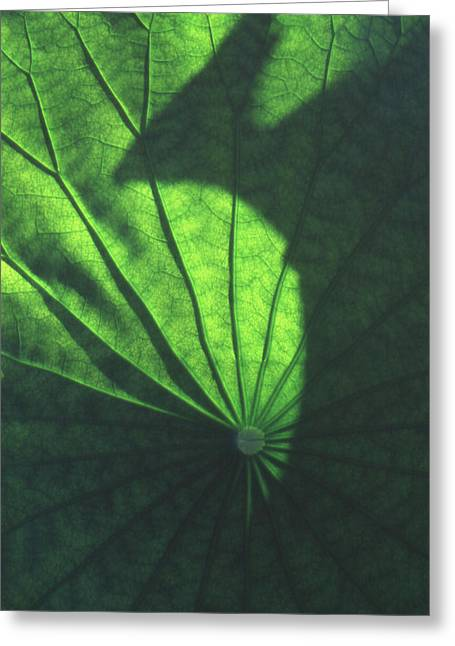 Lotus Leaves Greeting Cards - Lotus shadow of phoenix Greeting Card by Lian Wang