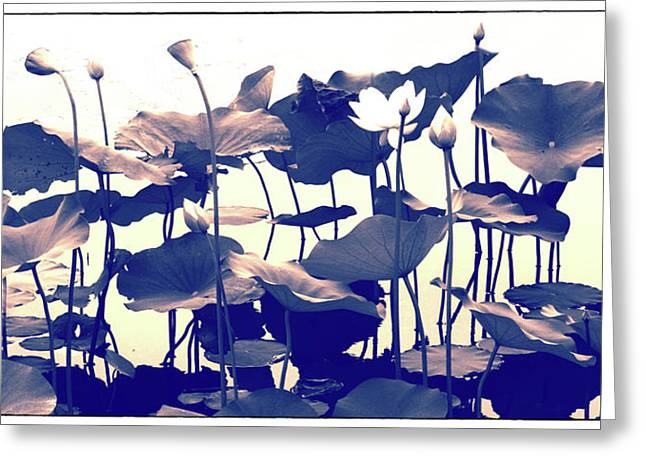 Lotus Tapestry Greeting Card by Jessica Jenney