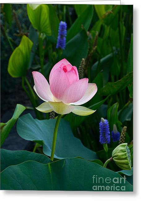 Aquatic Greeting Cards - Lotus with Blues Greeting Card by Byron Varvarigos