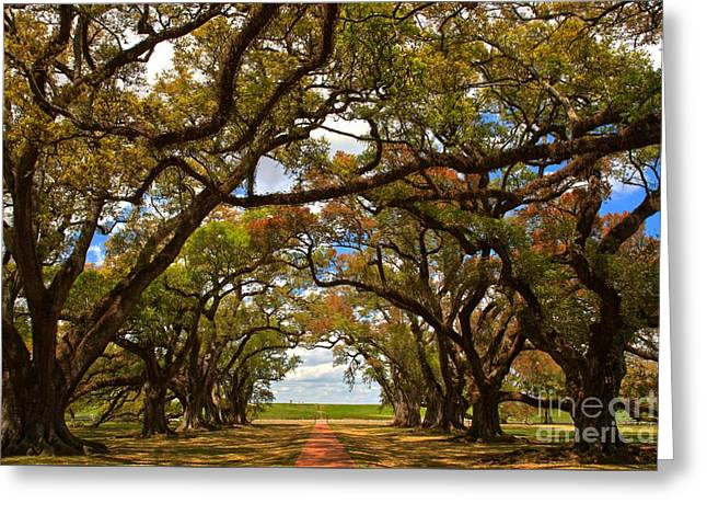 Slavery Greeting Cards - Louisiana Avenue Of The Oaks Greeting Card by Adam Jewell