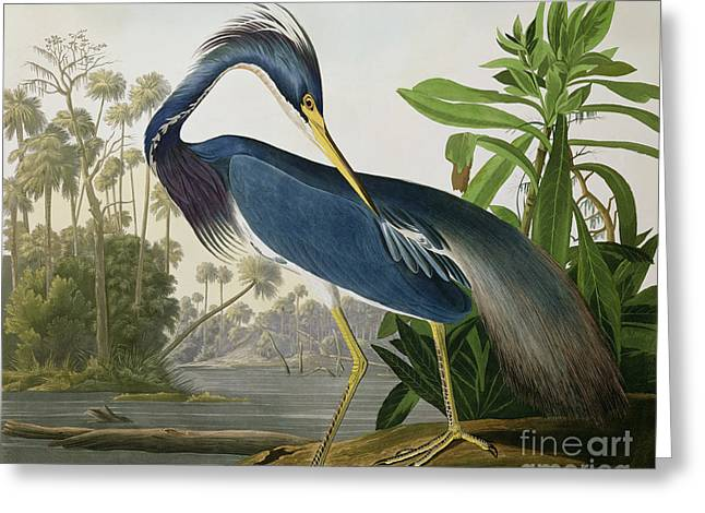 Natural Greeting Cards - Louisiana Heron Greeting Card by John James Audubon