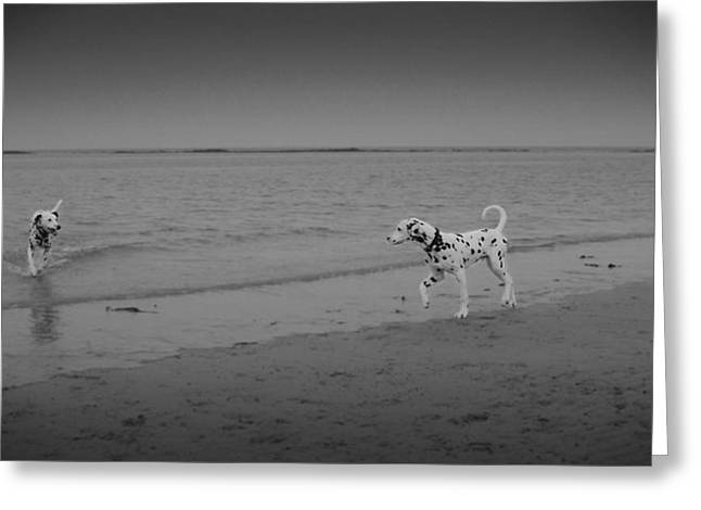 Dog Play Sea Greeting Cards - Love at first sight Greeting Card by Steven Mungur