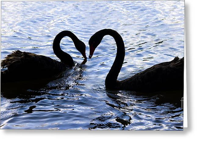 Love Birds On Swan Lake Greeting Card by Jorgo Photography - Wall Art Gallery