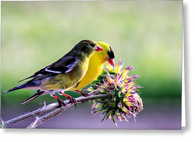 Pairs Greeting Cards - Love Birds Greeting Card by Randall Wilkerson