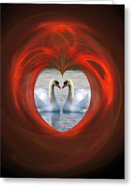 Swans... Greeting Cards - Love Greeting Card by Brian Roscorla
