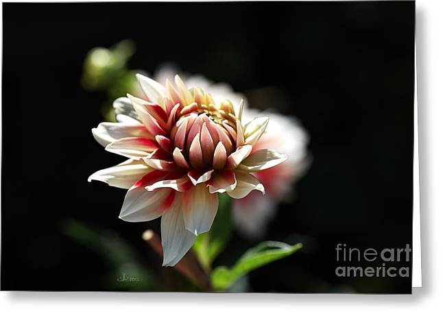Joy Watson Greeting Cards - Love For Dahlia Greeting Card by Joy Watson