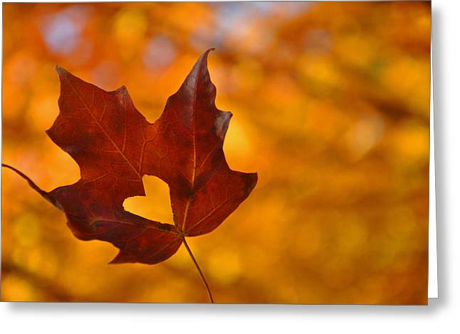 Love In Fall  Greeting Card by Brittany H