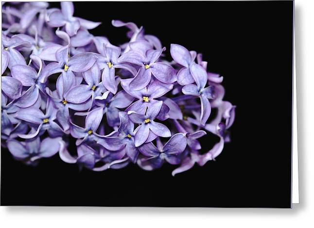 Stigma Greeting Cards - Love In Lilac Greeting Card by Debbie Oppermann