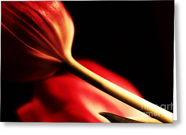 Artography Greeting Cards - Love in Red Greeting Card by Jayne Logan Intveld