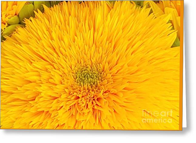Bloosom Greeting Cards - Love Love Yellow  Greeting Card by Jasna Gopic