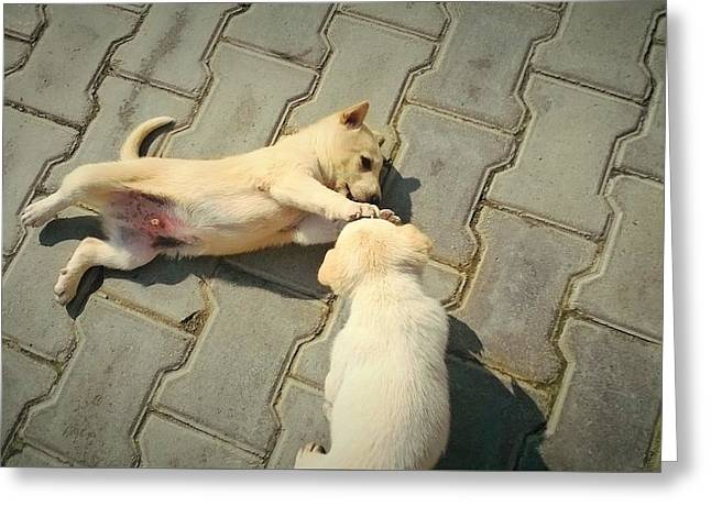 Puppies Photographs Greeting Cards - Love of Animal Greeting Card by Shivani Rulyan