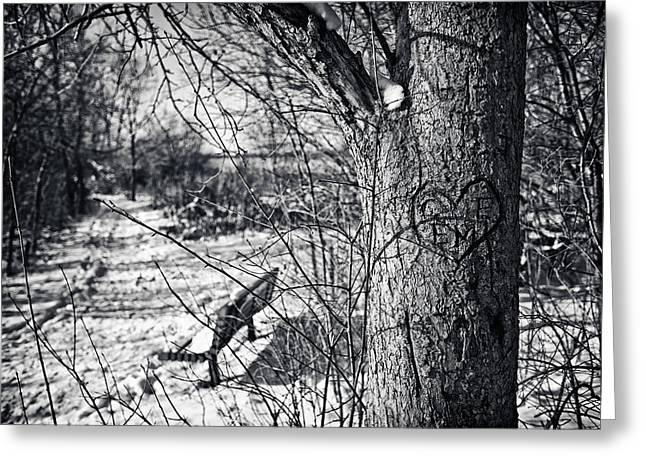 Nature Center Photographs Greeting Cards - Love on a Tree Greeting Card by CJ Schmit