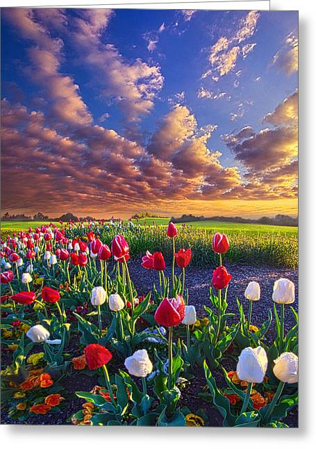 Tulip Tree Greeting Cards - Love Greeting Card by Phil Koch