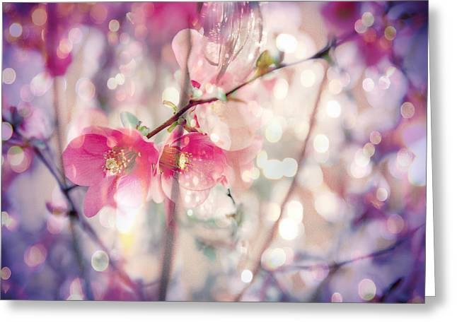 Textured Photograph Greeting Cards - Love song Greeting Card by Toni Hopper