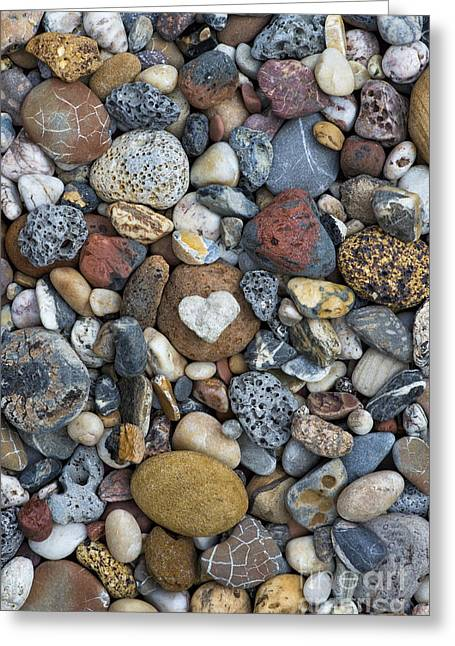 Beachcombing Greeting Cards - Love the Beach Greeting Card by Tim Gainey