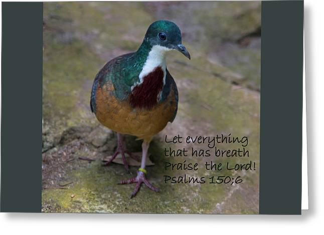 Lovely Bird, Praise The Lord Greeting Card by Malisa Brannon