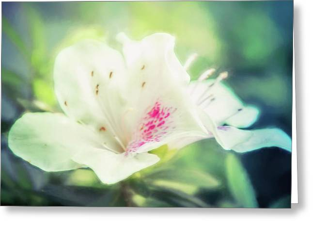 Lovely In White Greeting Card by Terry Davis