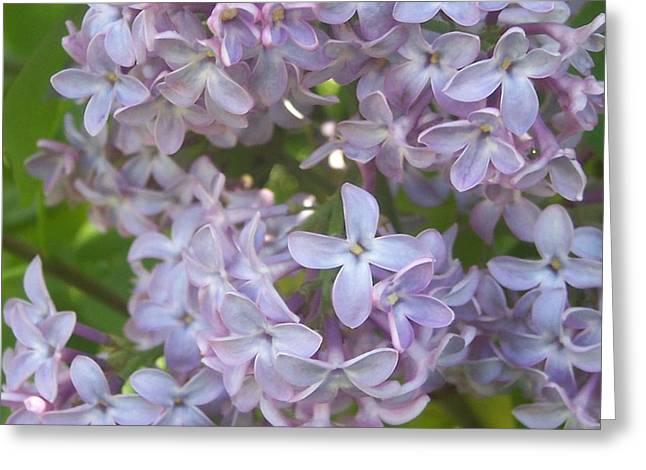 Anna Villarreal Garbis Greeting Cards - Lovely Lilacs Greeting Card by Anna Villarreal Garbis