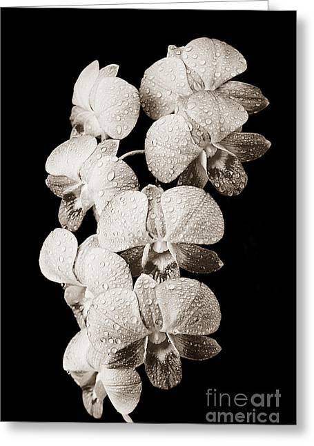 Lovely Orchid Cluster Greeting Card by Carl Shaneff - Printscapes