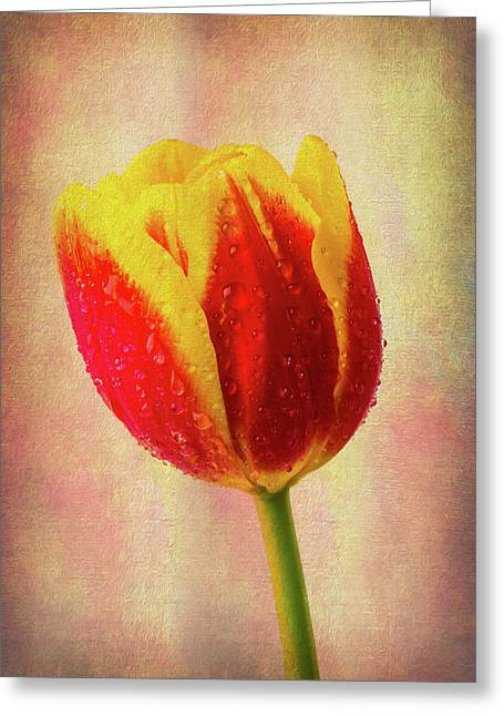 Lovely Textured Tulip Greeting Card by Garry Gay