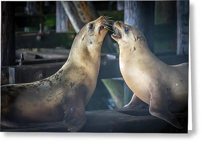 Harbor Seals Lovers Quarrel Greeting Card by James Hammond