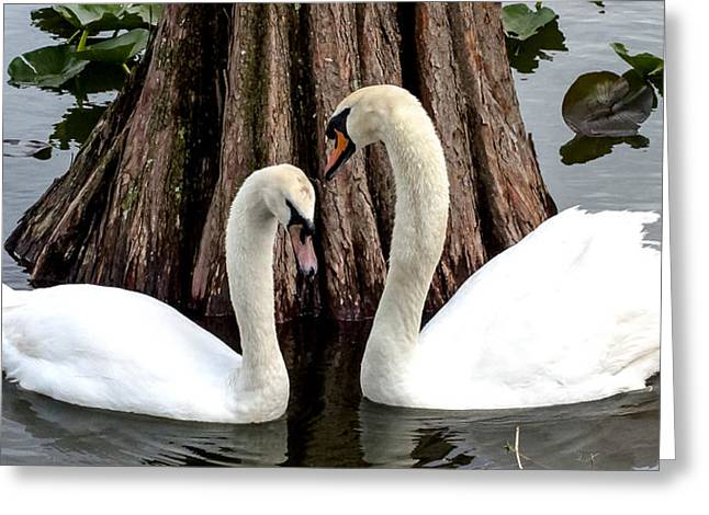 Polk County Florida Greeting Cards - Lovers Tryst Greeting Card by Norman Johnson