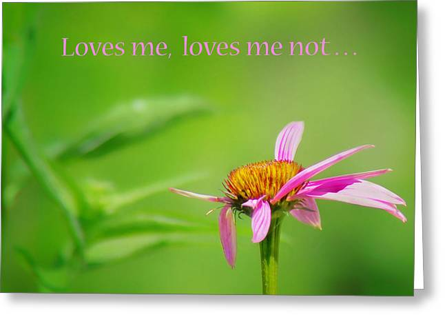 Missing Greeting Cards - Loves Me - Loves Me Not - Coneflower Greeting Card by Nikolyn McDonald