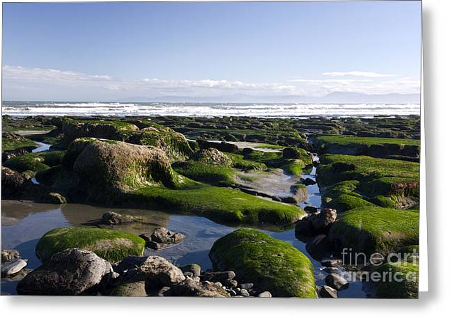 Alga Greeting Cards - Low Tide Greeting Card by Inga Spence