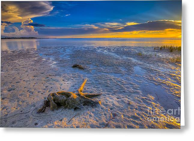 Gulf Of Mexico Scenes Greeting Cards - Low Tide Stump Greeting Card by Marvin Spates