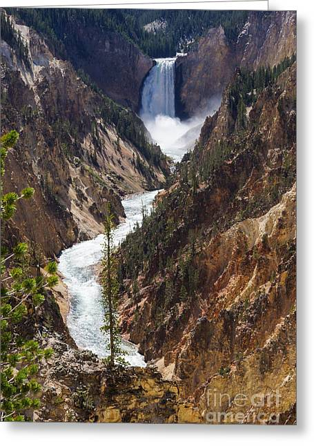 Stream Greeting Cards - Lower Falls Yellowstone Greeting Card by Jennifer White