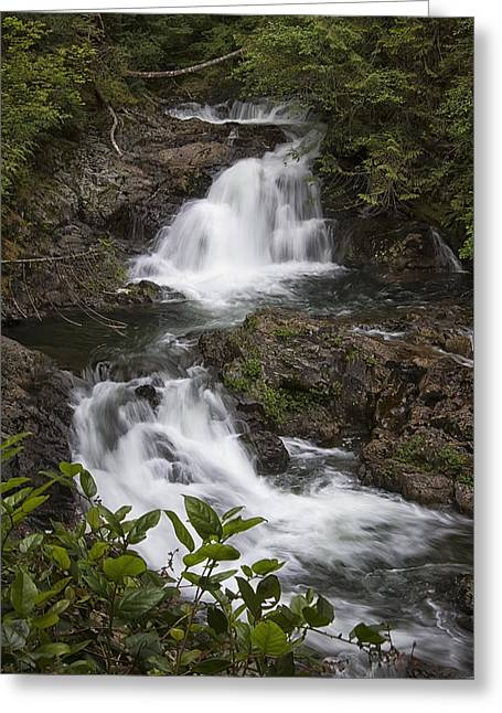 Fall Trees Greeting Cards - Lower Wallace Falls  Greeting Card by Steven Pavlov