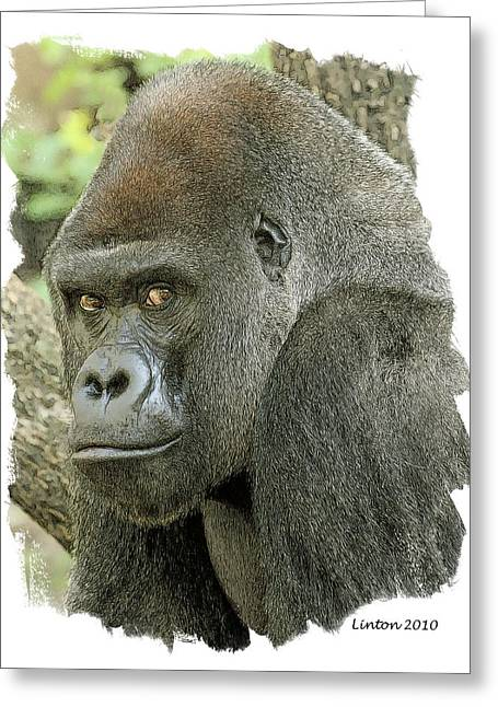 Western Digital Art Greeting Cards - Lowland Silverback Greeting Card by Larry Linton