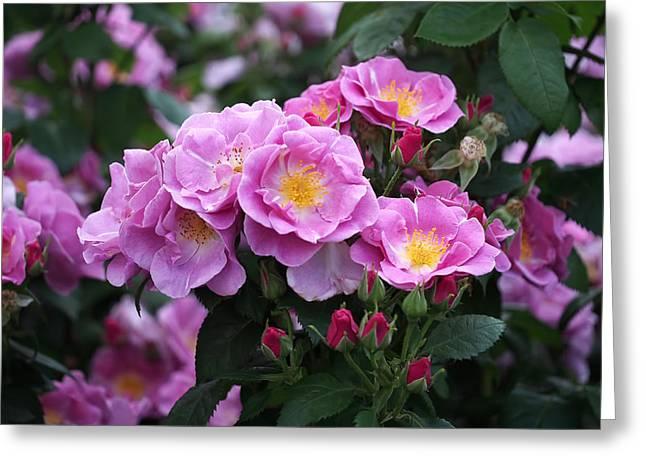 Lucky Floribunda Roses Greeting Card by Rona Black