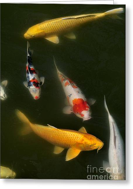 Japanese Photographs Greeting Cards - Lucky Pond Greeting Card by Andy Smy