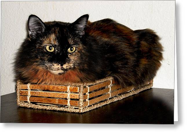 Bothers Greeting Cards - Lucy in the Box Greeting Card by Nilla Haluska