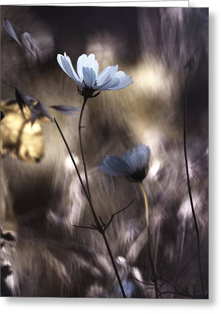 Macro Greeting Cards - Lueur Dautomne Greeting Card by Fabien Bravin