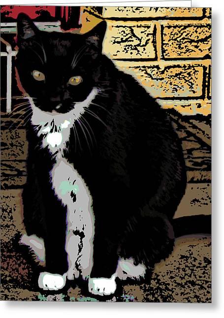 Tuxedo Digital Art Greeting Cards - Lulu Greeting Card by Maz