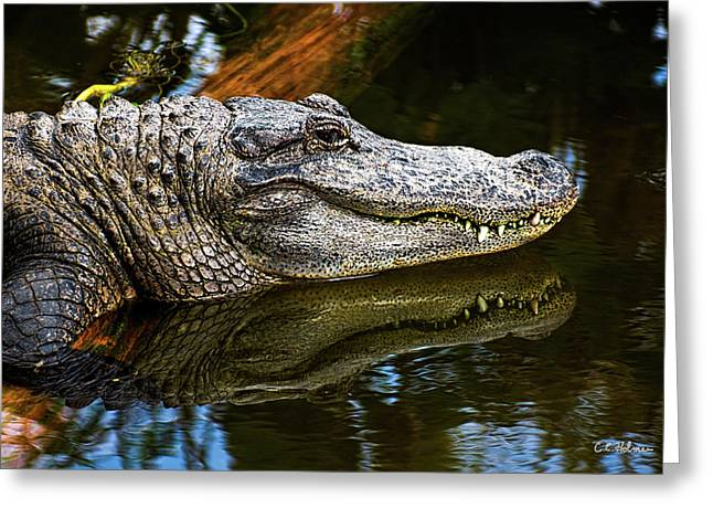 Florida Gators Photographs Greeting Cards - Lump On A Log Greeting Card by Christopher Holmes