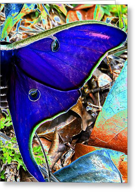 Luna Greeting Cards - Luna Moth false color work one Greeting Card by David Lee Thompson