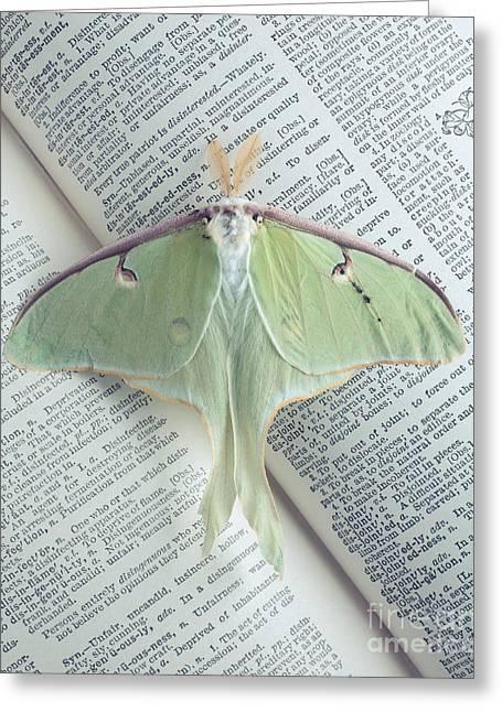 Luna Greeting Cards - Luna Moth on Book Greeting Card by Edward Fielding
