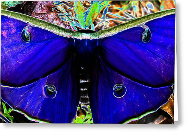 Luna Greeting Cards - Luna Moth UV pano Greeting Card by David Lee Thompson